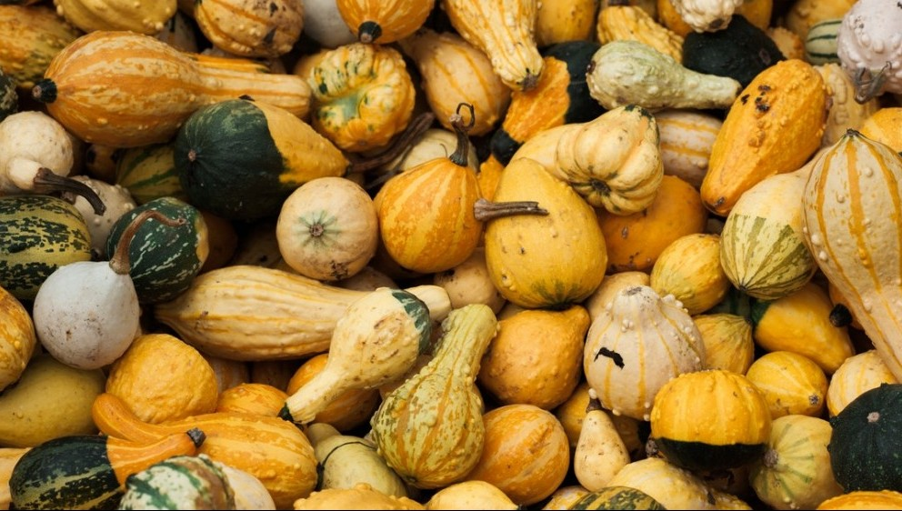 Squash Family - Good for the Spleen